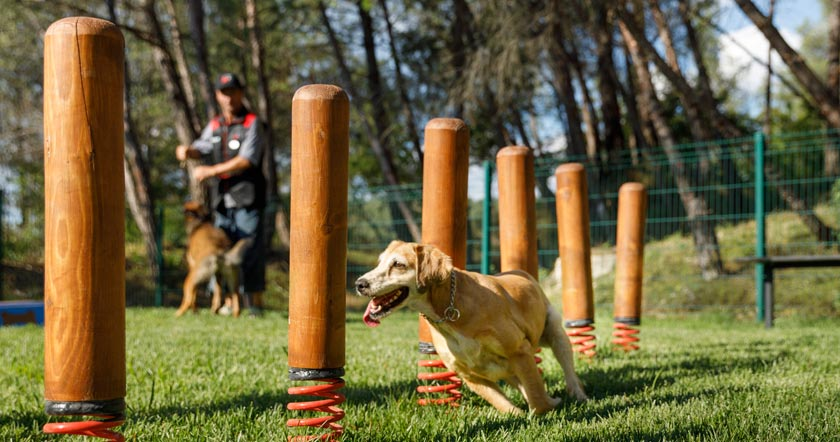 Agility-Parcours - dog playground - photo