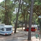 Campsite Porton Biondi - camping in the shade