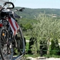 Camper stop Motovun - pitch