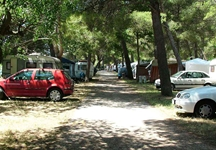 Campsite Dardin - camping in the shade